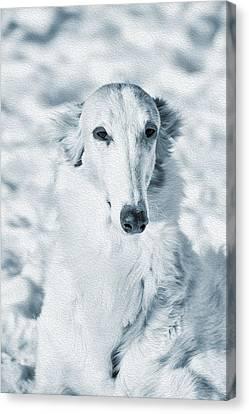 Borzoi Russian Hound Portrait Canvas Print by Christian Lagereek