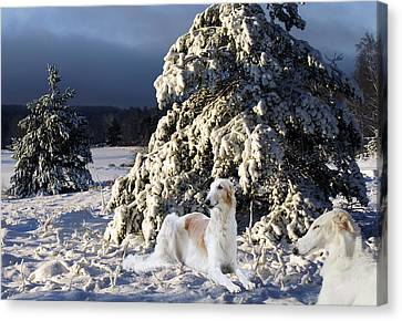 Borzoier Russian Hounds In A Winter Landscape Canvas Print by Christian Lagereek