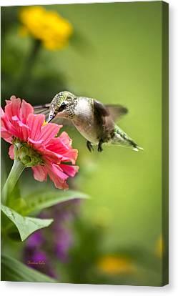 Botanical Hummingbird Canvas Print by Christina Rollo