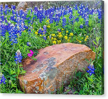Boulder And Bluebonnets Canvas Print by Thomas Pettengill