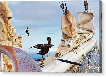 Bowsprit Pelicans Canvas Print by Deborah Smith