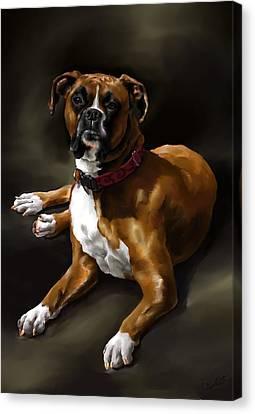 Boxer Canvas Print by Cassandra Gallant