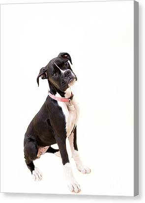 Boxer Girl 2 Canvas Print by Rebecca Cozart