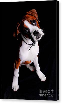 Boxer Pup Canvas Print by Jt PhotoDesign