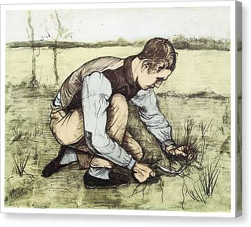 Boy Cutting Grass With A Sickle Canvas Print by Vincent Van Gogh