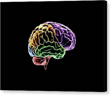 Brain Canvas Print by Sci-comm Studios
