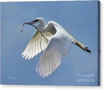 Branch Of Peace Canvas Print by Jennie Breeze