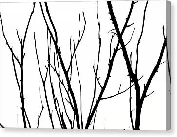 Branches Canvas Print by Aidan Moran