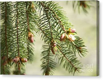 Branches Canvas Print by Idaho Scenic Images Linda Lantzy
