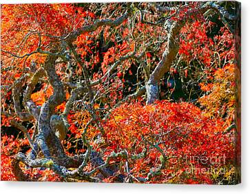 Branches Of Color Canvas Print by Cathy Dee Janes