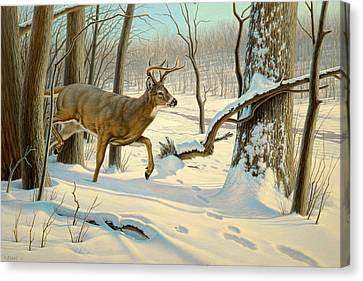 Breaking Cover-whitetail Canvas Print by Paul Krapf