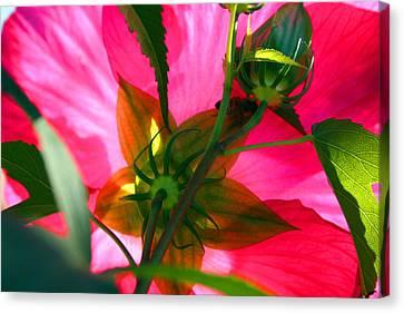 Bridge Of Flowers Canvas Print by Karma Boyer