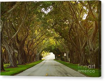 Bridge Road Banyans Canvas Print by Lynda Dawson-Youngclaus