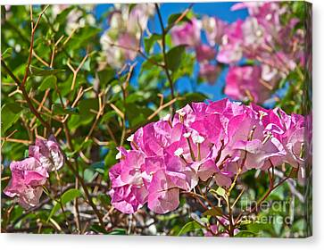 Bright Pink Bougainvillea Flowers Canvas Print by Valerie Garner