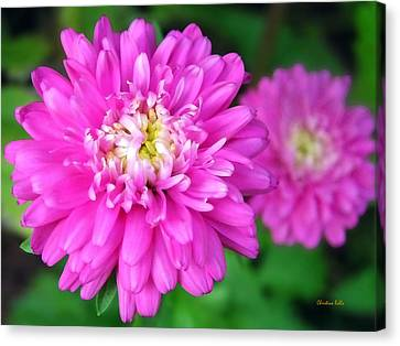 Bright Pink Zinnia Flowers Canvas Print by Christina Rollo
