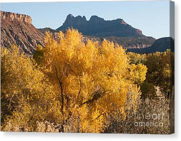Brilliant Yellow Fall Colors Along The Virgin River Utah Canvas Print by Robert Ford