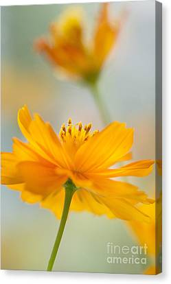 Bring Me A Little Sunshine Canvas Print by Ivy Ho