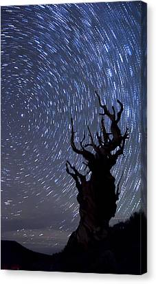 Bristlecone Star Trails Canvas Print by Cat Connor