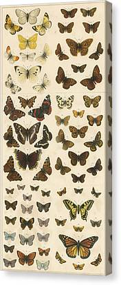 British Butterflies Canvas Print by English School