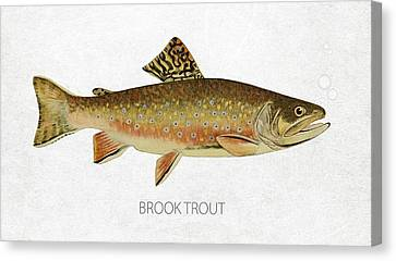 Brook Trout Canvas Print by Aged Pixel