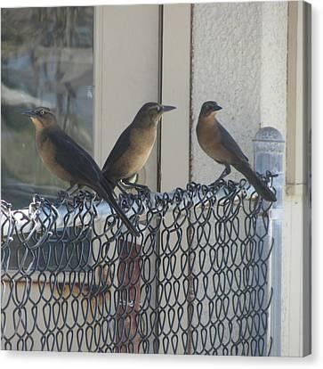 Brown Birds At Fernandina Beach Canvas Print by Cathy Lindsey
