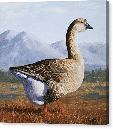 Brown Chinese Goose Canvas Print by Crista Forest