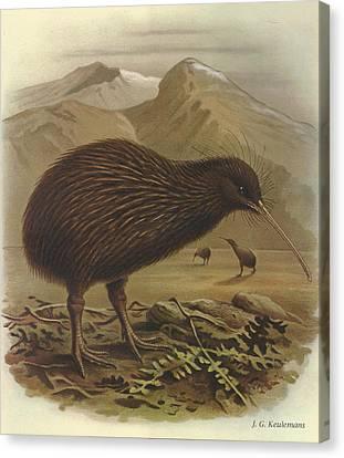 Brown Kiwi Canvas Print by J G Keulemans