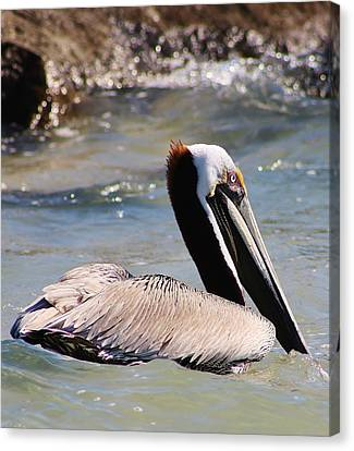 Brown Pelican Canvas Print by Bruce Bley
