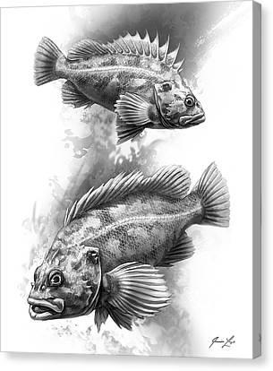 Brown Rockfish Pair Canvas Print by Javier Lazo