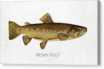 Brown Trout Canvas Print by Aged Pixel