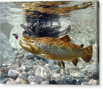Brown Trout And Supervisor  Canvas Print by Paul Buggia
