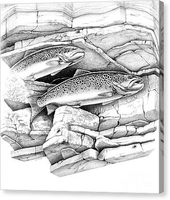 Brown Trout Pencil Study Canvas Print by Jon Q Wright