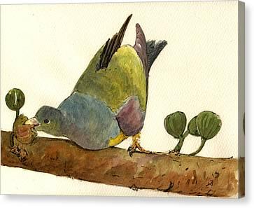 Bruce S Green Pigeon Canvas Print by Juan  Bosco