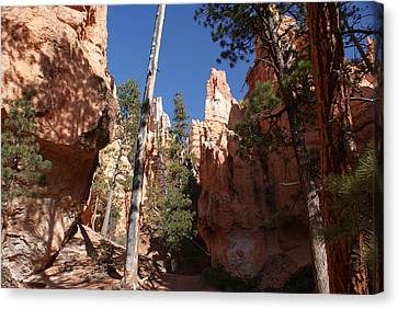 Bryce Canyon Trail Canvas Print by Michael J Bauer
