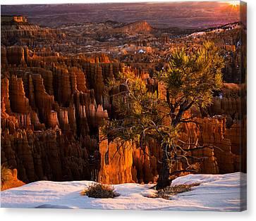 Bryce Canyon Winter Sunrise Canvas Print by Leland D Howard