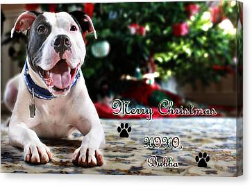 Bubba's First Christmas Canvas Print by Shelley Neff