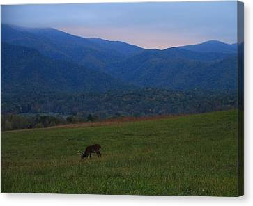 Buck At Sunrise Canvas Print by Dan Sproul