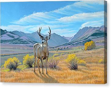 'buck Deer-tom Miner Basin' Canvas Print by Paul Krapf