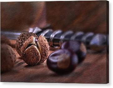 Buckeye Nut Still Life Canvas Print by Tom Mc Nemar