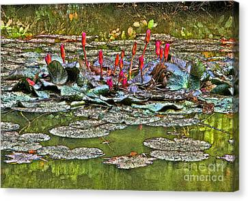 Budding Passion Canvas Print by Charline Xia