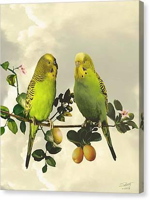Budgerigars In Kumquat Tree Canvas Print by IM Spadecaller