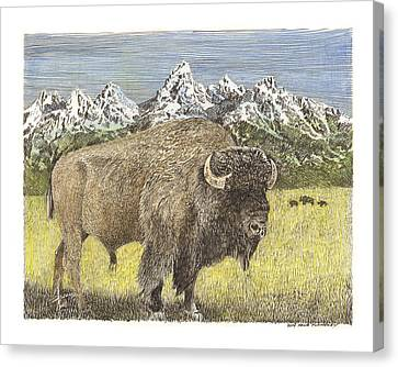 Buffalo Of Yellowstone National Park Canvas Print by Jack Pumphrey