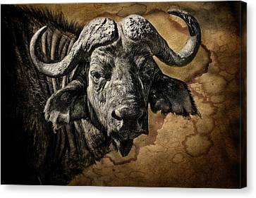 Buffalo Portrait Canvas Print by Mike Gaudaur