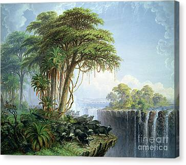 Buffalos Driven To The Edge Of The Chasm Opposite Garden Island Victoria Falls Canvas Print by Thomas Baines