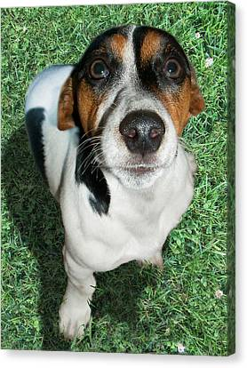 Bugsy On Grass Canvas Print by Ally Witt