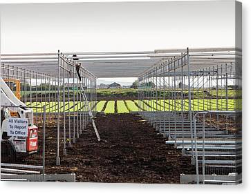 Building Greenhouses Canvas Print by Ashley Cooper