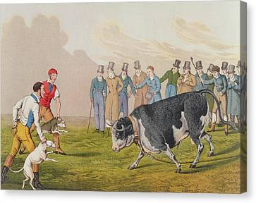 Bull Baiting Canvas Print by Henry Thomas Alken
