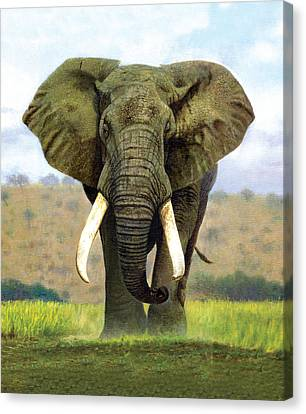 Bull Elephant Canvas Print by Chris Heitt