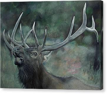 Bull Elk Drawing Canvas Print by Janet Pancho Gupta