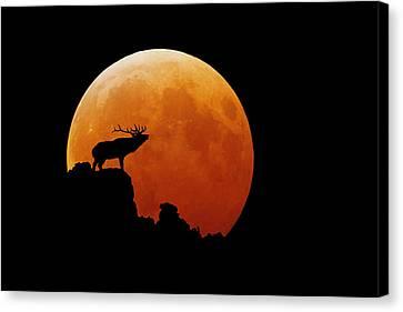 Bull Elk Canvas Print by Stuart Harrison
